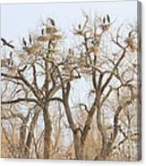 Thats A Lot Of Heron Canvas Print