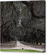 The 99 Oak Trees Canvas Print