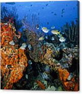 The Active Reef Canvas Print