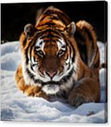 The Amur Tiger Canvas Print