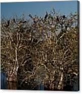 The Anhinga Trees Canvas Print