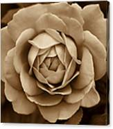The Antique Rose Flower Canvas Print