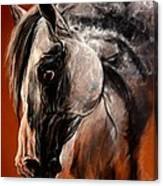 The Arabian Horse Canvas Print