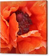 The Art Of Poppy Canvas Print