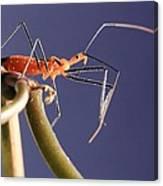 Garden Assassin Bug Canvas Print