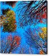 The Autumn Leaves At Potato Creek Canvas Print