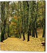 The Autumn Path Canvas Print