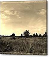 The Back Pasture Canvas Print