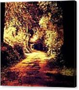 The Back Road Canvas Print