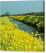 The Banks Of Yellow Canvas Print