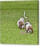 The Bassets Canvas Print