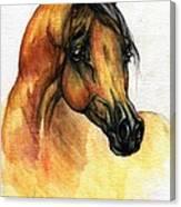 The Bay Arabian Horse 14 Canvas Print
