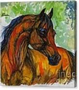 The Bay Arabian Horse 3 Canvas Print