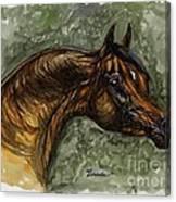The Bay Arabian Horse Canvas Print