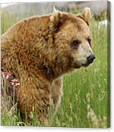 The Bear Dry Brushed Canvas Print