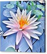 The Beautiful Lily Pond Canvas Print