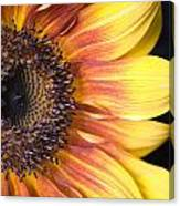 The Beautiful Sunflower Canvas Print