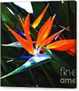 The Beauty Of A Bird Of Paradise Canvas Print