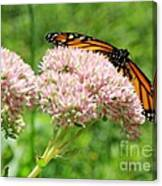 The Beauty Of A Monarch Canvas Print