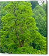 The Beauty Of A Tree Canvas Print