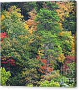 The Beauty Of Autumn Canvas Print
