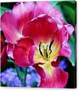 The Beauty Of Flowers Canvas Print