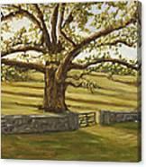 The Bedford Oak Summer Canvas Print