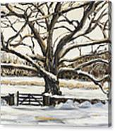 The Bedford Oak Winter Canvas Print