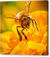 The Bee Gets Its Pollen Canvas Print
