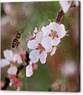 The Bee In The Cherry Tree Canvas Print