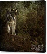 The Big And Not Too Bad Wolf Canvas Print