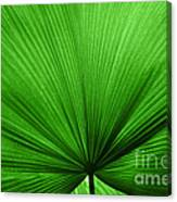 The Big Green Leaf Canvas Print