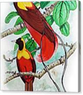 The Birds Of Paradise Canvas Print