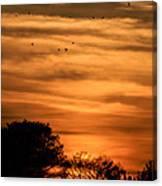 The Birds Still Fly Canvas Print