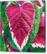 The Bleeding Heart Canvas Print