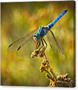The Blue Dragonfly  Canvas Print