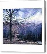 The Blue Trees Canvas Print