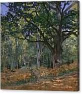 The Bodmer Oak Canvas Print