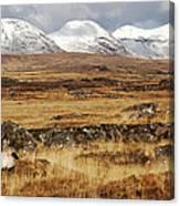The Bog Road Canvas Print