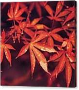 The Bold Reds Of Fall Canvas Print