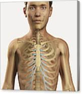 The Bones Within The Body Pre-adolescent Canvas Print
