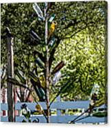 The Bottle Tree Canvas Print