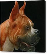 The Boxer... Canvas Print