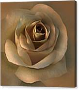 The Bronze Rose Flower Canvas Print