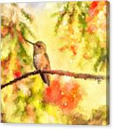 The Bubbly World Of A Hummingbird Canvas Print