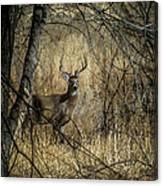 The Buck Canvas Print
