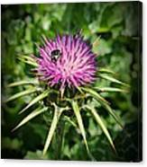 The Bug And The Thistle Canvas Print