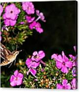 The Butterfly Garden At Night Canvas Print