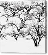 The Calligraphy Of Apple Trees In Winter Canvas Print