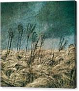 The Calm In The Storm II Canvas Print